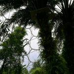 palmsnbamboo